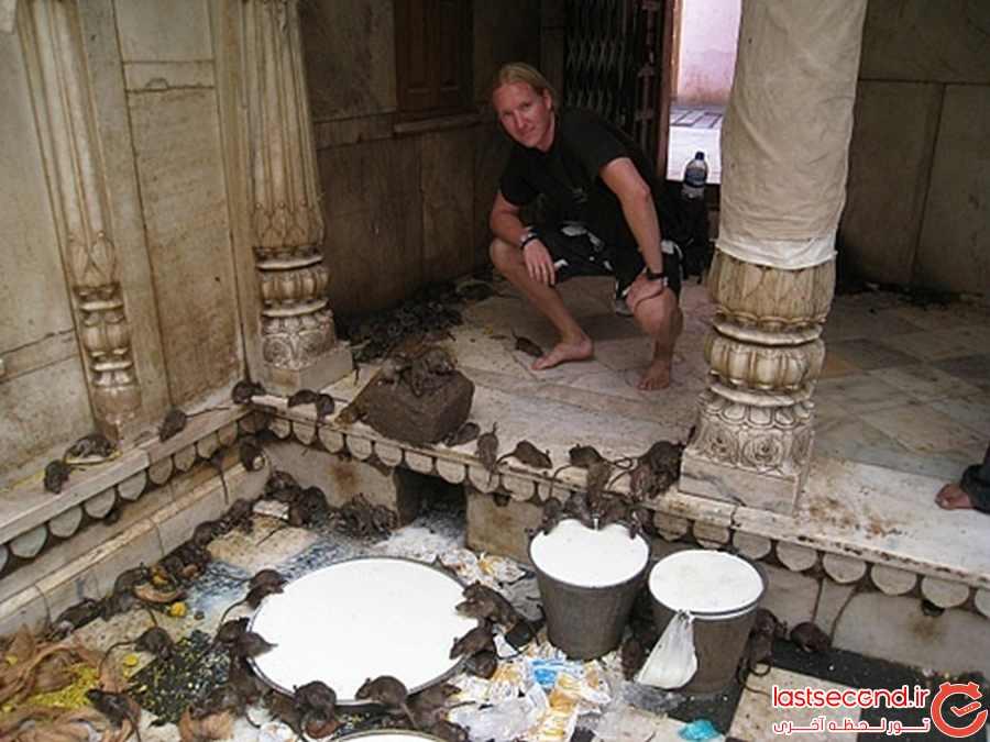 معبدی با 20،000 موش مقدس !!