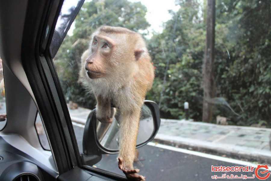 Monkey Hill پوکت