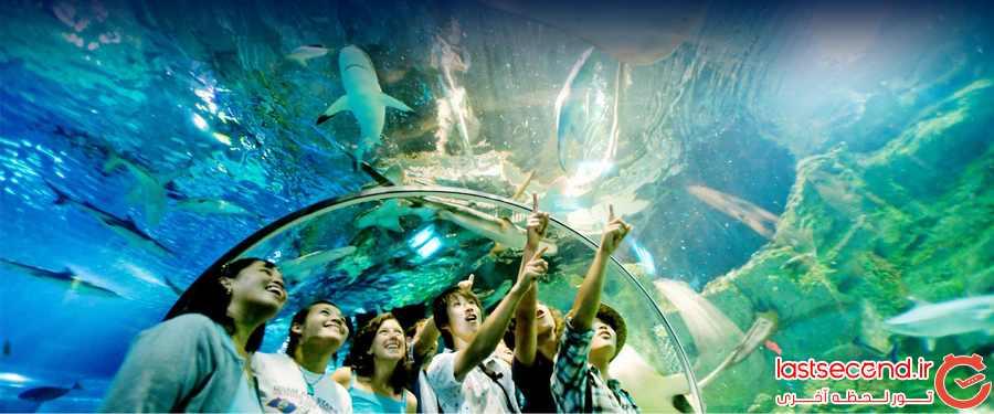 دنیای زیر آب ( Underwater World Pattaya)