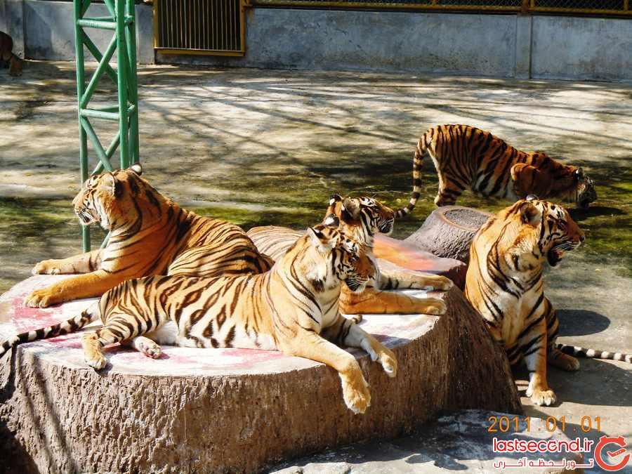 باغ وحش ببرها