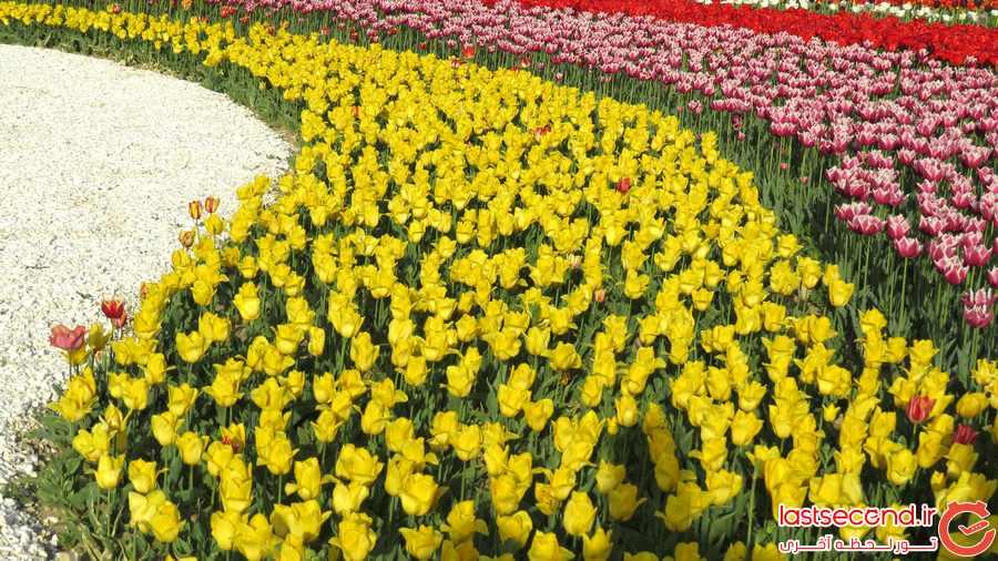 جشنواره گل ارومیه