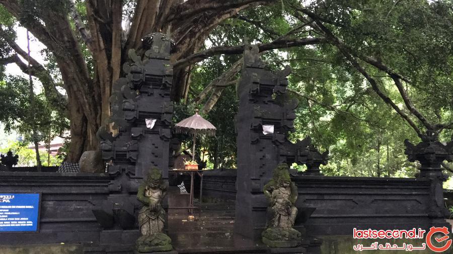 بالی: بهشتی روی زمین