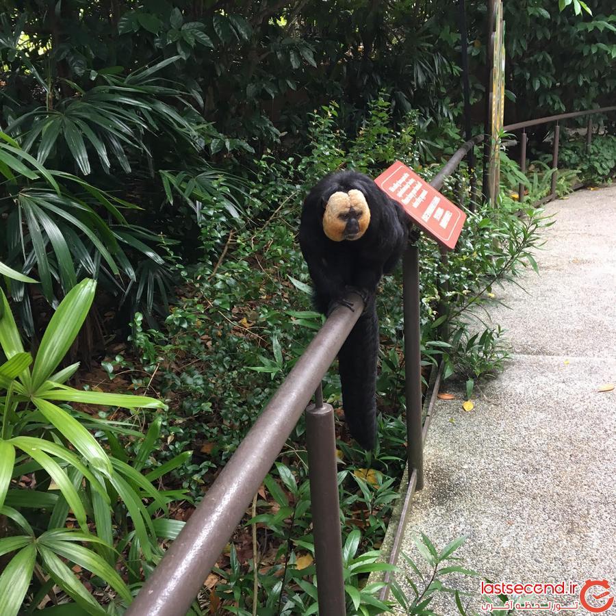 سفرنامه بالی +سنگاپور