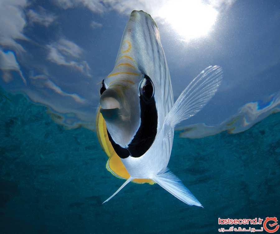 خیره کننده ترین جزایر مرجانی دنیا