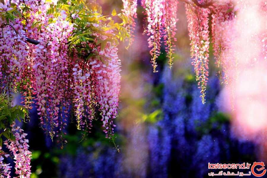 زیباترین درختان جهان