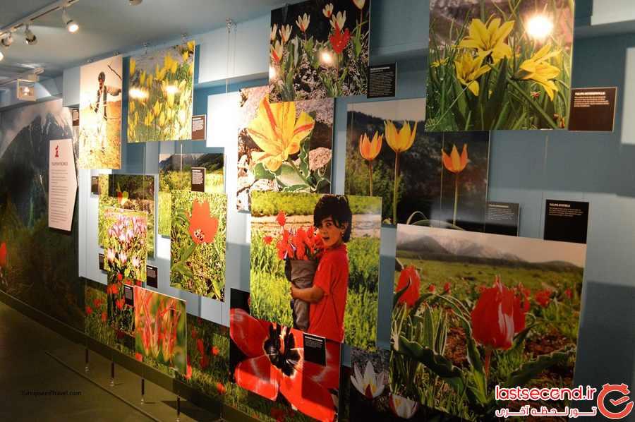 موزه گل لاله
