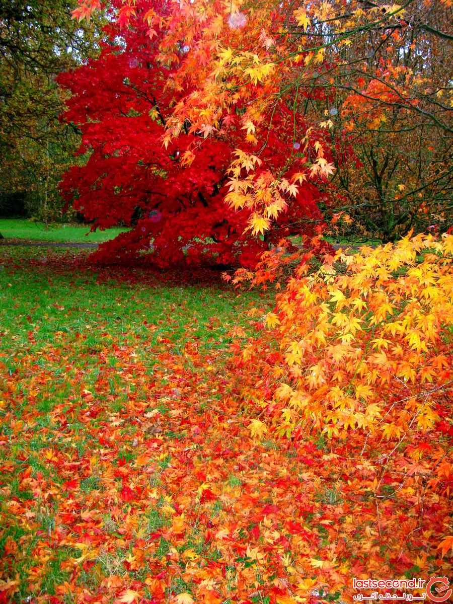 عکس های پاییز غمگین