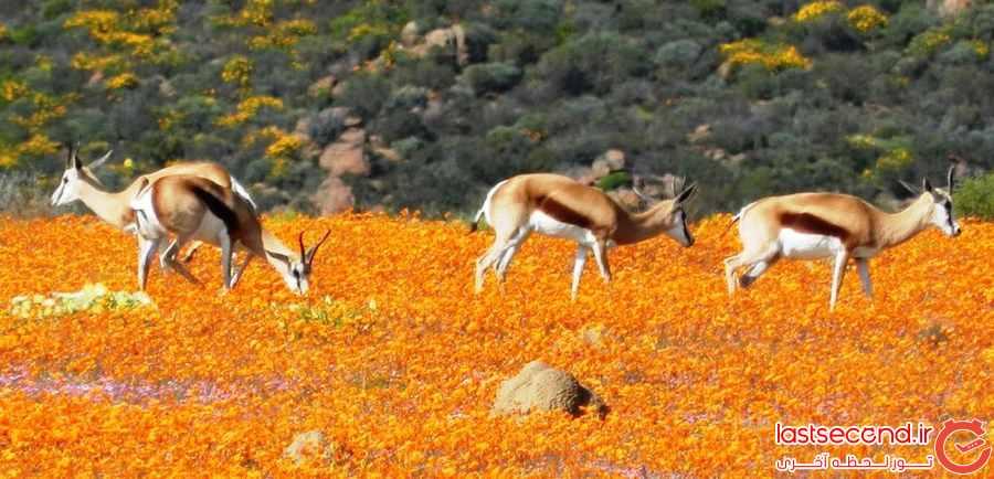 طبیعت زیبا در آفریقا  
