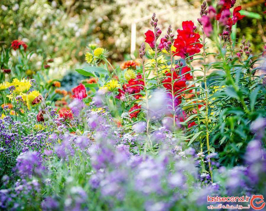 باغ ملی  Botanical Garden