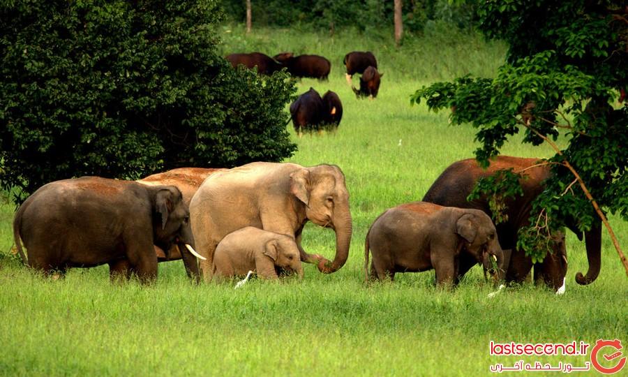 زیباترین پارک های تایلند