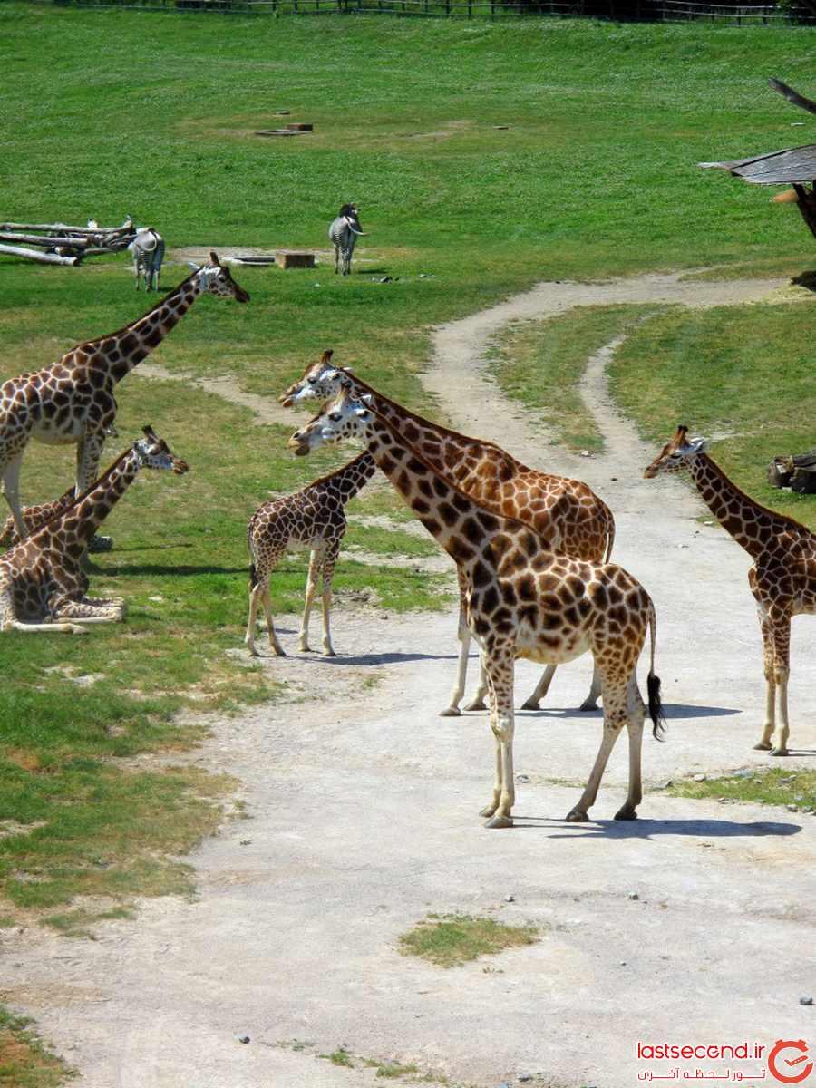 باغ وحش پراگ