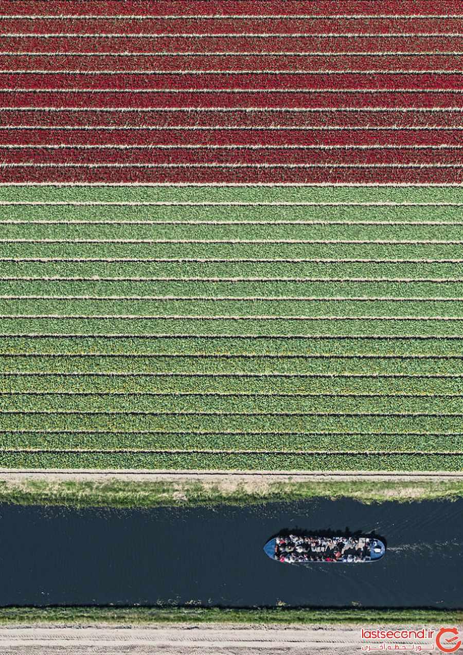 رنگارنگ ترین تصاویر از زمین های لاله در هلند  