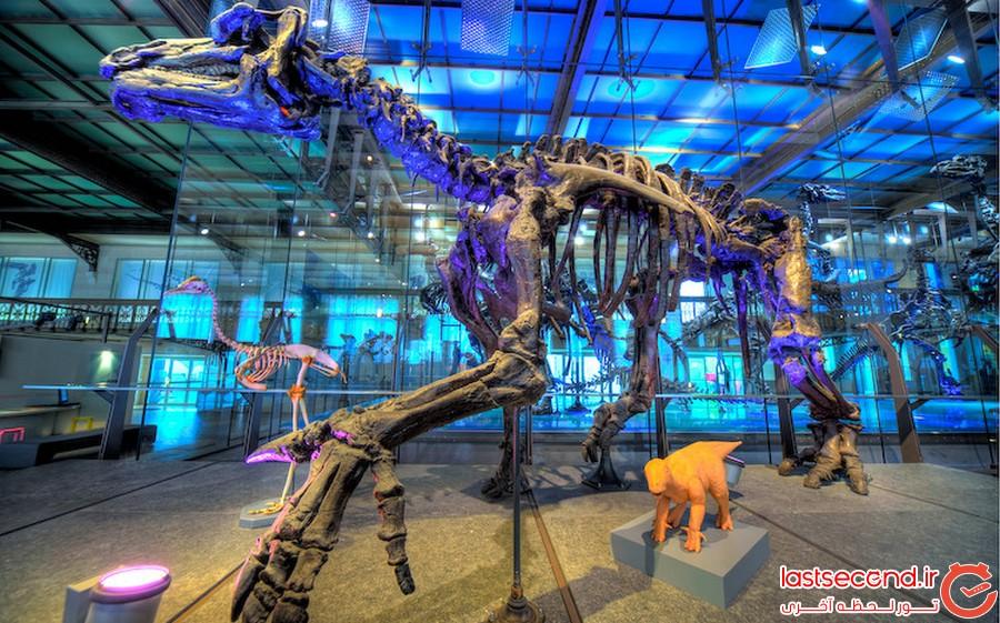 بهترین موزه های دایناسور دنیا