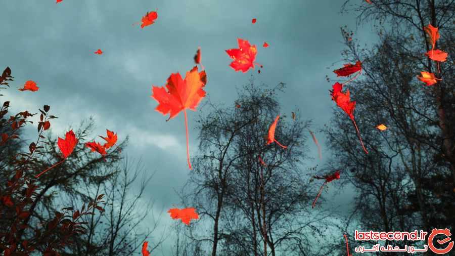  زیباترین تصاویری که می توانید از پاییز ببینید              