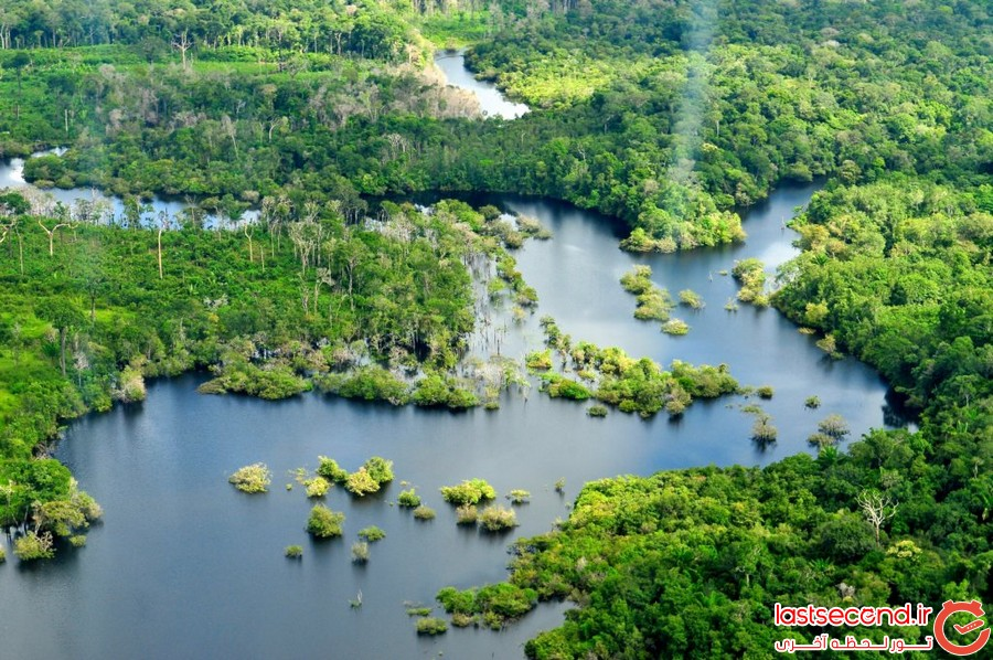 حقایقی درباره ی جنگل های بارانی آمازون