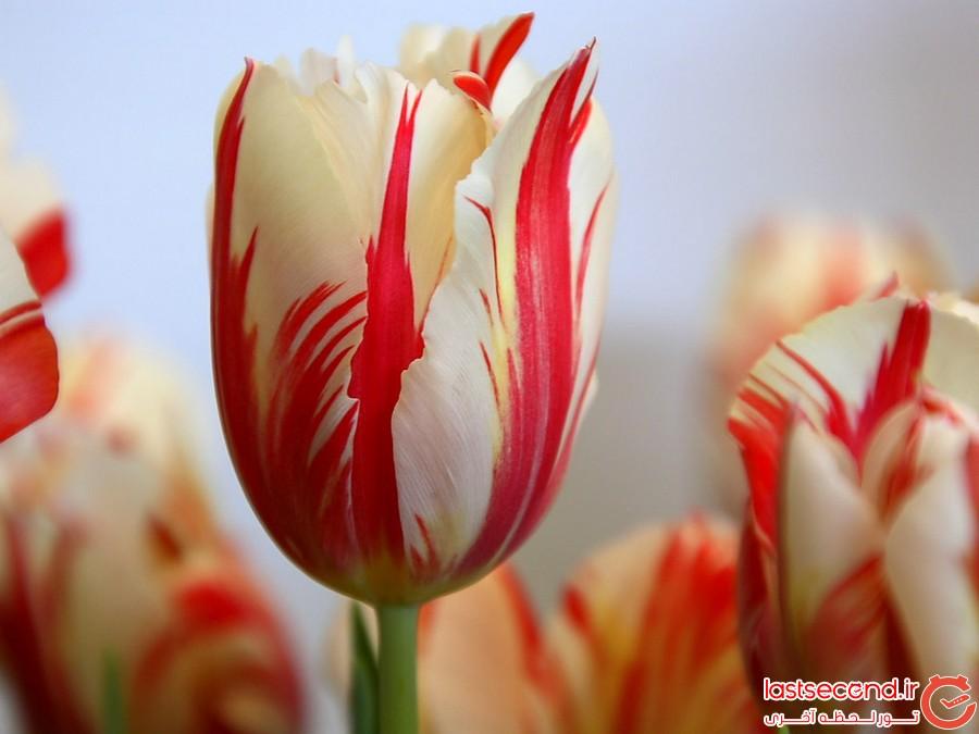 خارق العاده ترین گل های جهان