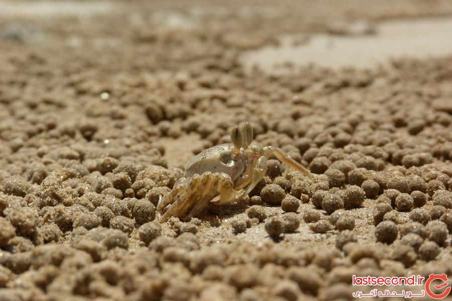 آثار هنرمندانه خرچنگ های بازیگوش