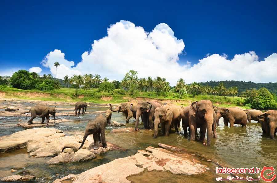 مرکز نگهداری فیل های پیناوا