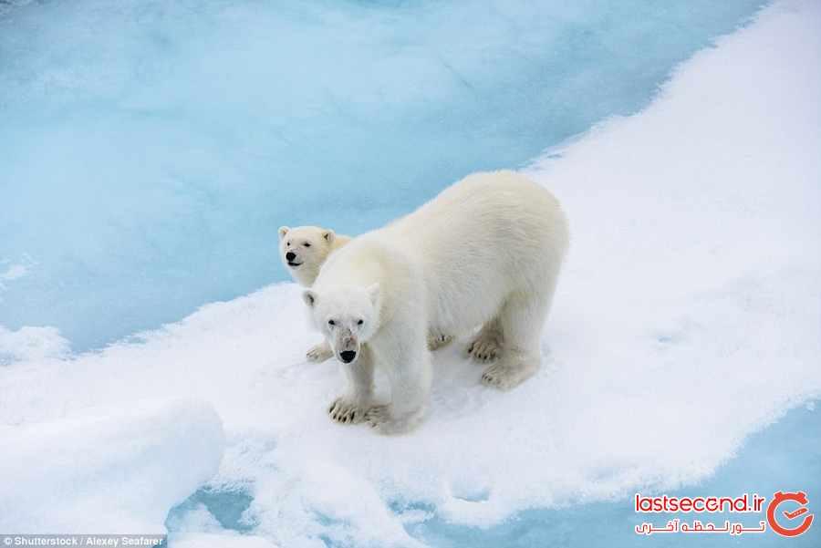 مقاصد گردشگری مورد علاقه طرفداران حیوانات 