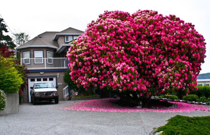 16 درخت شگفت انگیز جهان