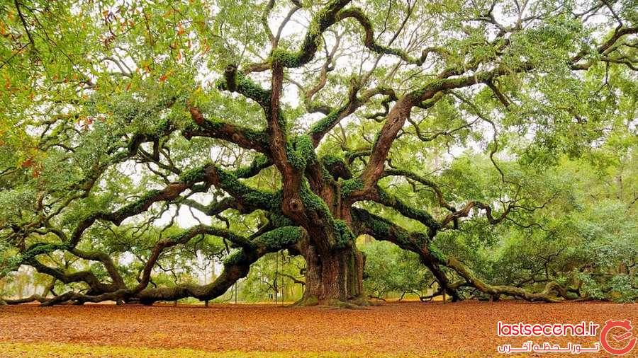 عجیب ترین درختان