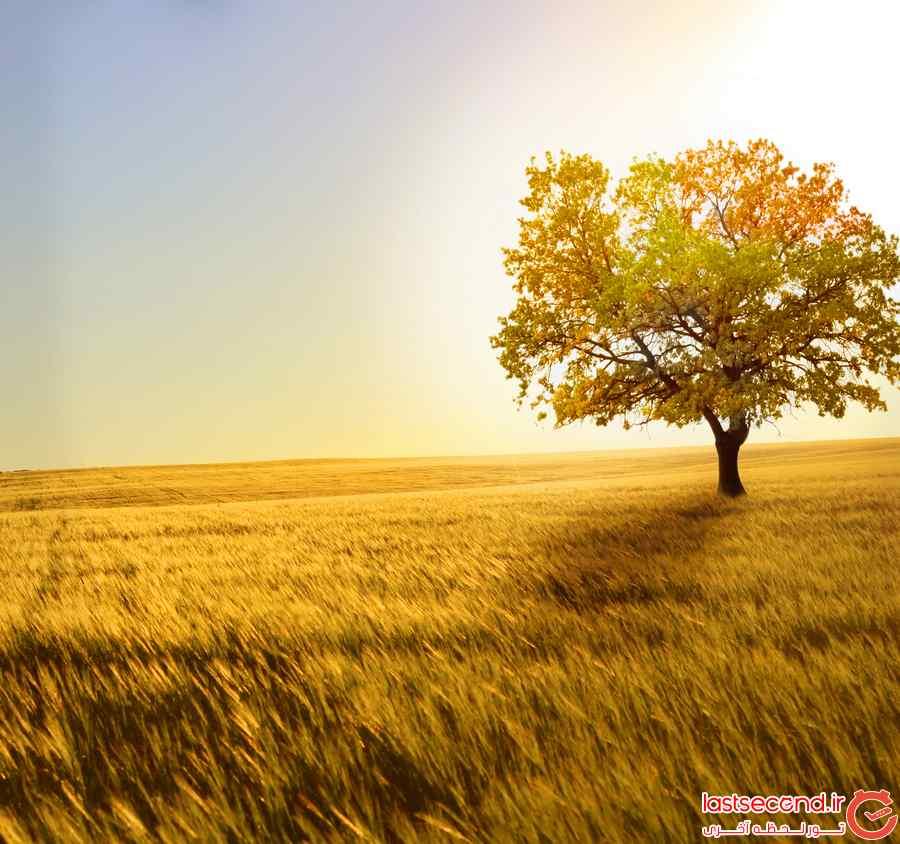 عکس زیبای پاییزی