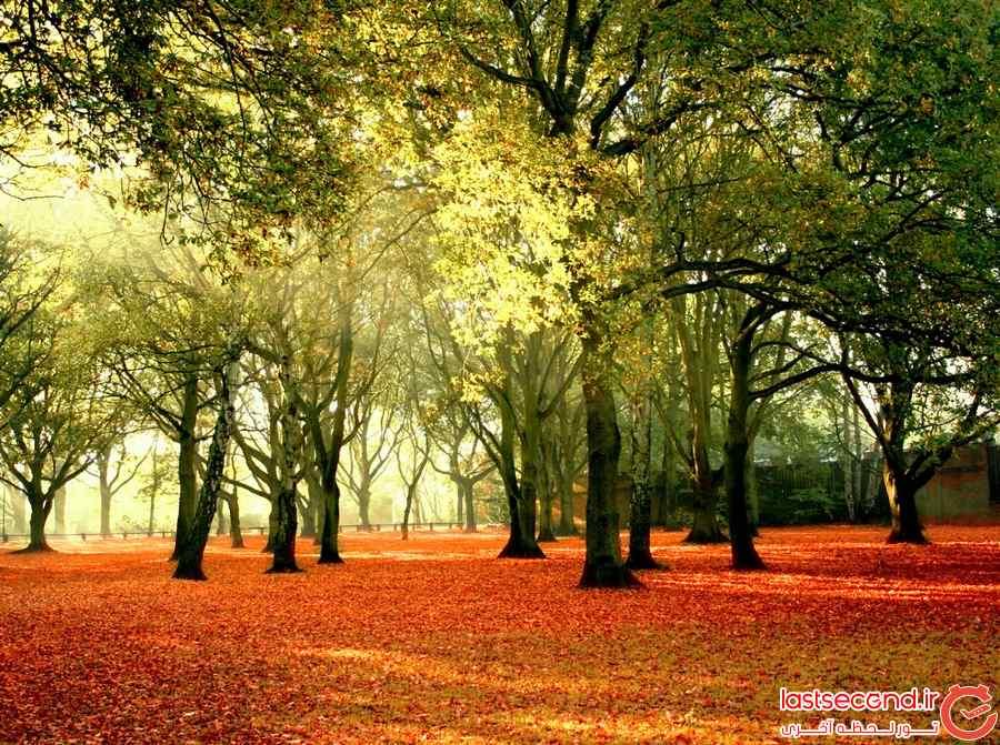 زیباترین عکس پاییزی دنیا