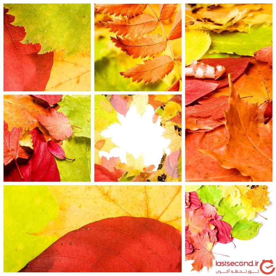 برگ های پاییز