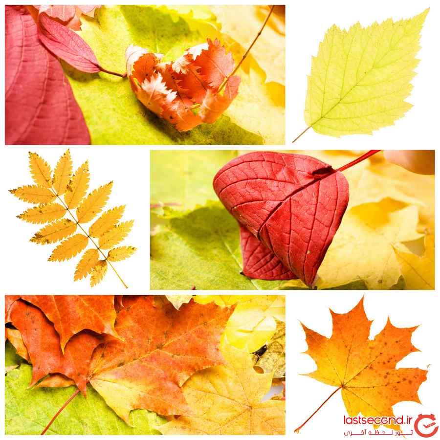انواع برگ پاییز