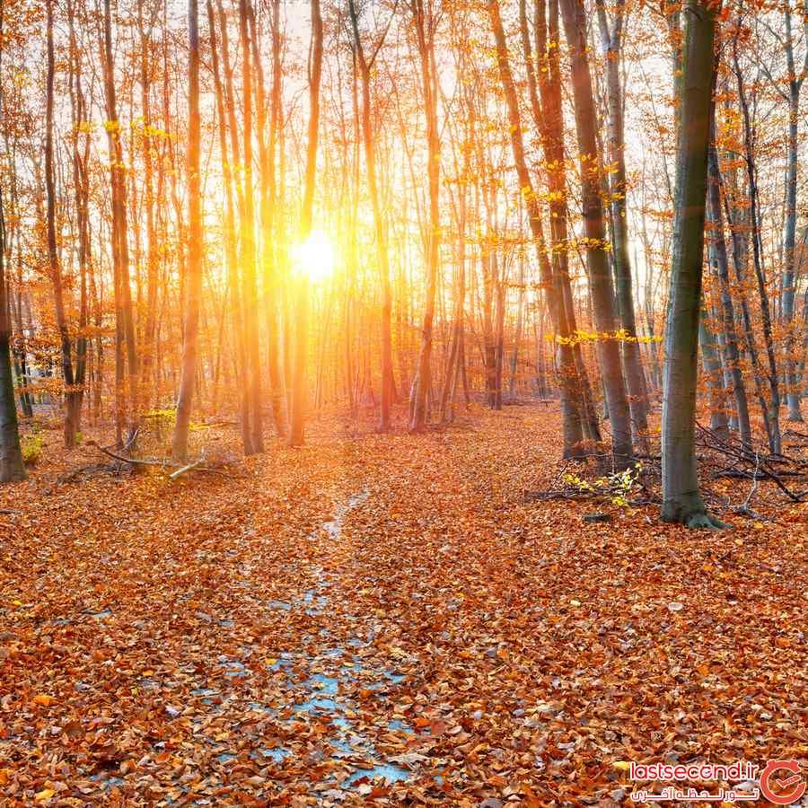 منظره پاییز