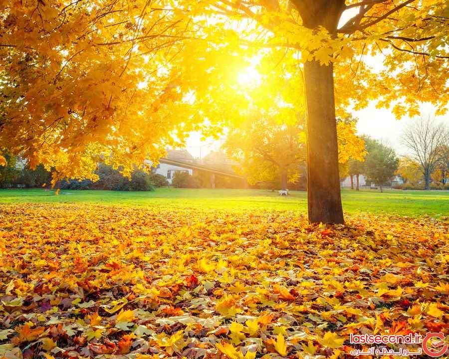 عکس برگ پاییزی