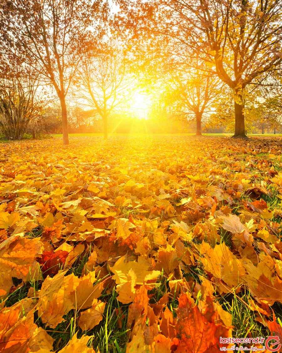 عكس پائيز