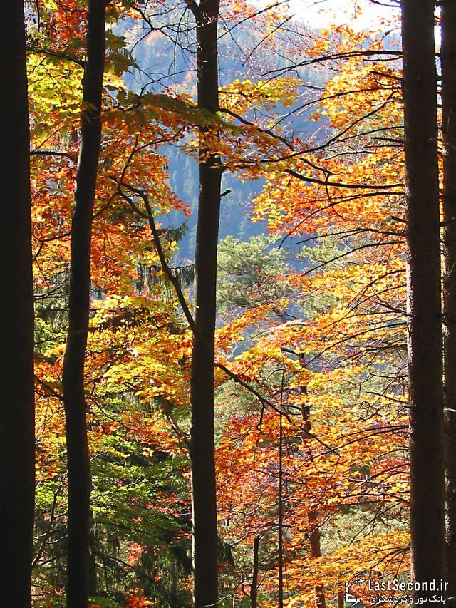 پارک ملی کارپاتیان در اوکراین