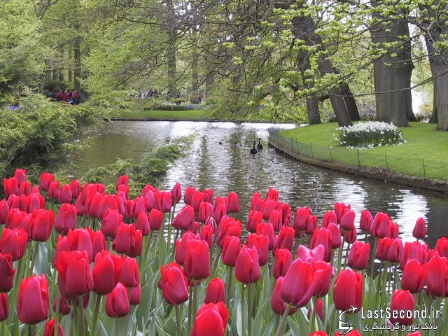 هلند باغ گل اروپا