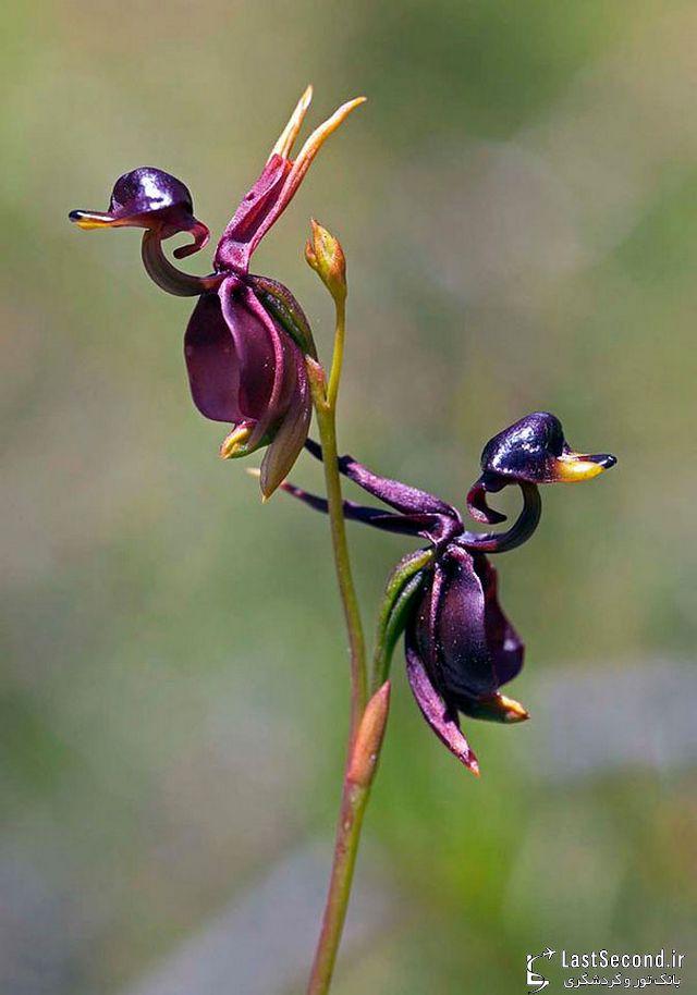 هفده گل زیبا که در اشکالی باورنکردنی خودنمایی میکنند