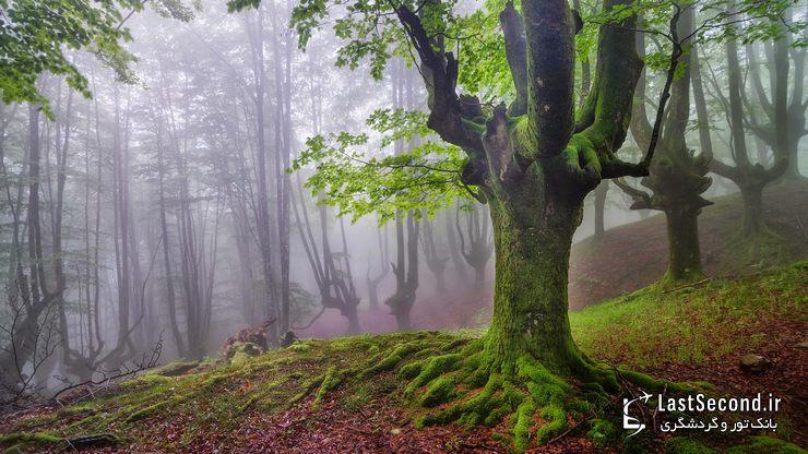 پارک طبیعی Gorbea، ایالات آلوا و ویزکایا (Alva-Vizcaya)، باسک، اسپانیا