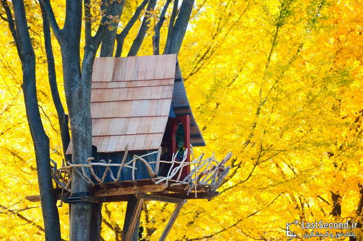 ده خانهی درختی جالب در گوشه و کنار جهان